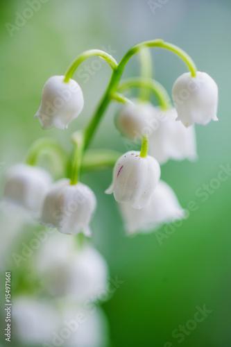 Deurstickers Lelietje van dalen Lily-of-the-valley flowers closeup