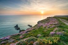 Wild Flowers On Cornish Cliffs