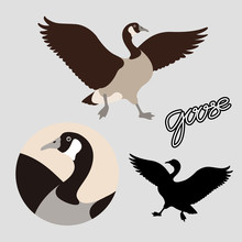 Canadian Goose Vector Illustra...