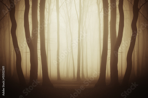 Wall Murals Forest misty forest fantasy background