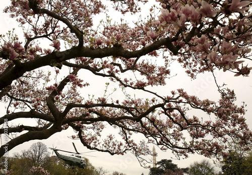 Historic Southern Magnolia Tree Frames United States President