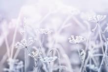 Delicate Openwork Flowers In T...