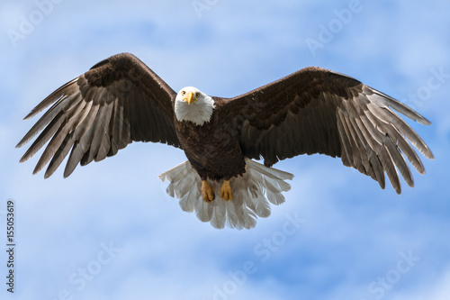 Fotobehang Eagle American National Symbol Bald Eagle with Wings Spread on Sunny Day Isolated by Sky