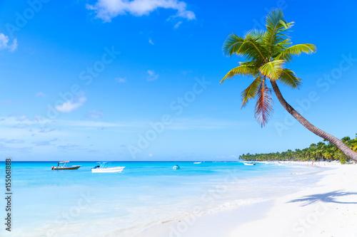 Montage in der Fensternische Karibik Coconut palm grows on white sandy beach