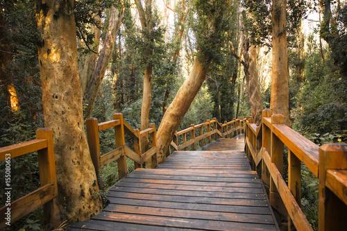 Tuinposter Weg in bos Bosque de Arrayanes