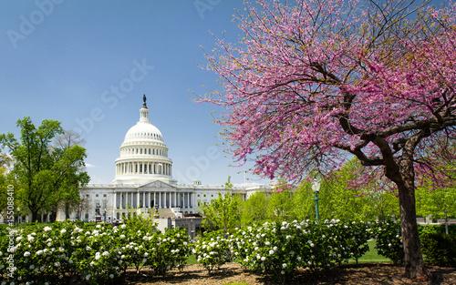 Fototapeta The US Capitol in spring, Washington DC obraz