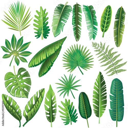 wektor-tropikalnych-lisci