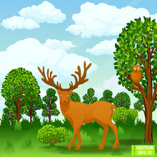 Deer In A Forest Glade.