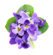 Bouquet Of Violets Flowers .