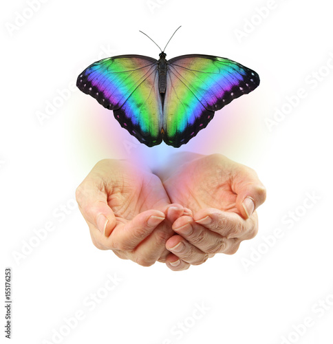 Obraz na plátne Letting Go - cupped female  hands with a large rainbow colored butterfly moving