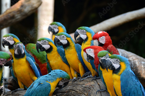In de dag Papegaai Parrot.