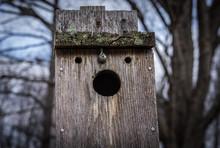 Bird House Or A Face?