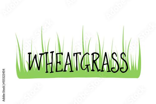 wheatgrass logo organic natural wheat fresh food plant green