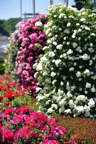Deurstickers Groene rose garden