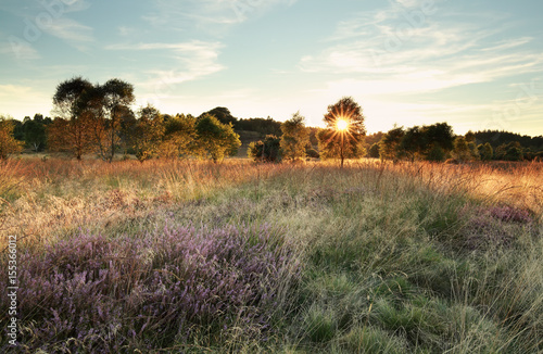 Foto op Canvas Australië sunbeams over marsh with heather flowers