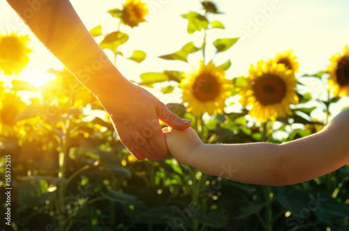 Fotografia Hands on the field of sunflowers