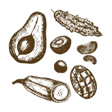 Vector Hand Drawn Monochrome Sketchy Set Of Some Jamaican Fruits Isolated On White. Food, Natural Themes, Image For Biological, Botanical, Geographical And Other Educational Purposes. Web.