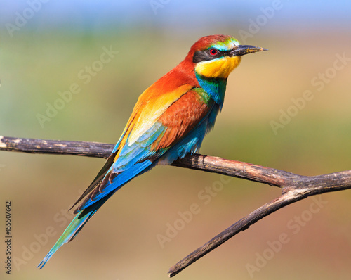 colored exotic bird sitting on a dry branch