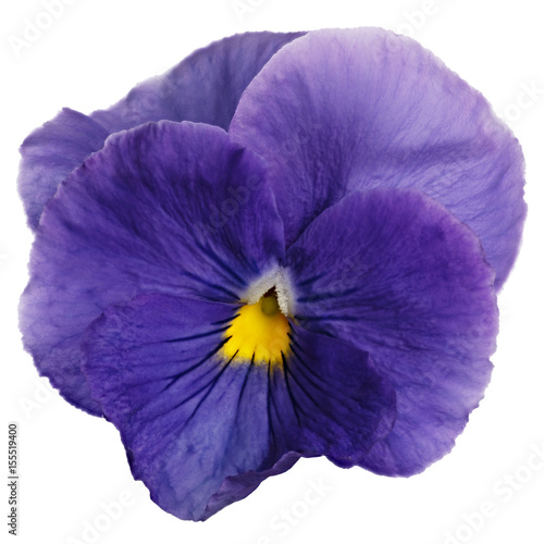 Spoed Fotobehang Pansies Flower Viola wittrockiana photographed close-up, isolated on white background.