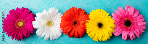 Poster Gerbera Colorful gerbera flowers Blue background. Top view