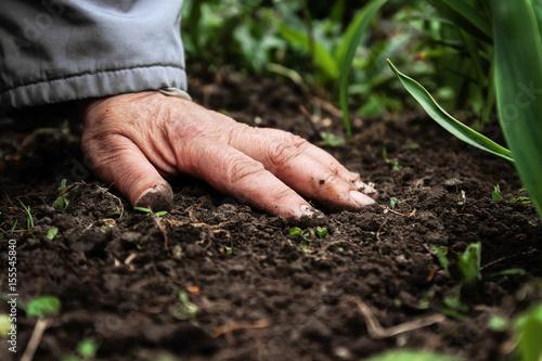 Fotografie, Obraz  A female old hand on soil-earth