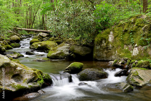 Fototapeten Forest river Smoky Mountains National Park Mossy creek cascade