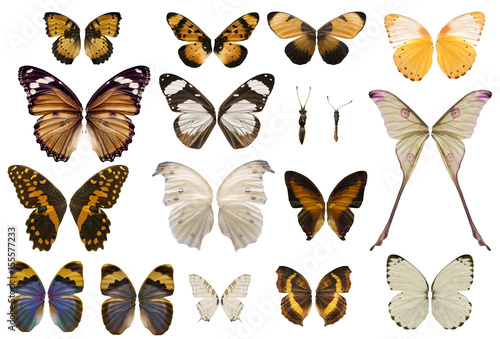 Fototapeta  Collection of stunning butterfly wings isolated on white