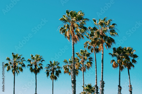 Tuinposter Palm boom Palm trees at Santa Monica beach. Vintage post processed. Fashion, travel, summer, vacation and tropical beach concept.