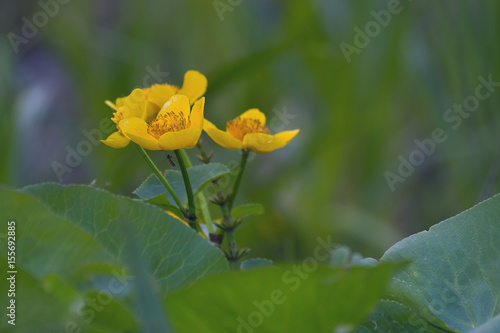 Pod kwiatkiem - 155692885