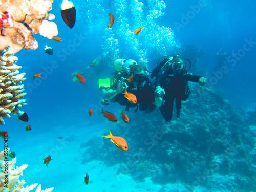 Obraz na plátně Команда дайверов под водой. Дайвинг в Красном море, Египет