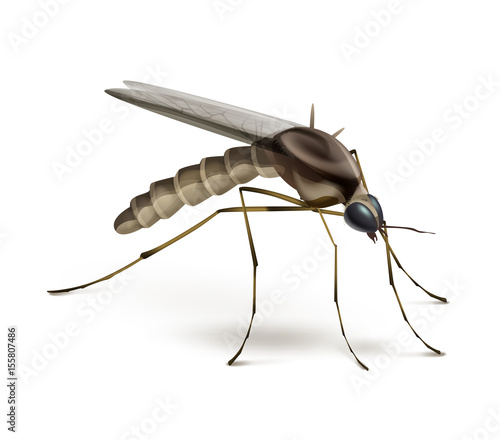 Photo Mosquito on white background