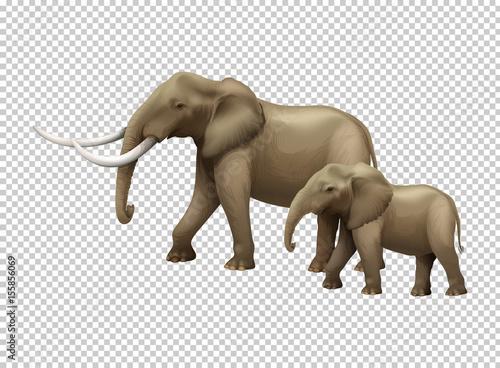 Photo  Wild elephants on transparent background