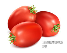 Italian Plum Tomatoes Roma. Tomato With Green Stem. Vector