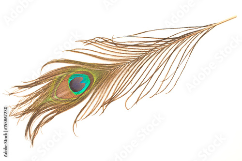 Paon Peacock feather isolated on white background