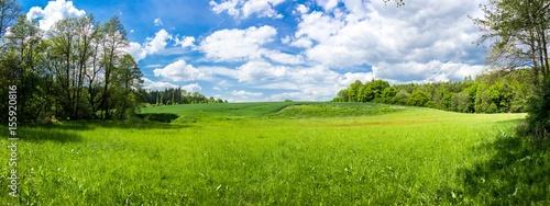 Fotobehang Platteland Summer landscape with forest and field in Czech Republic