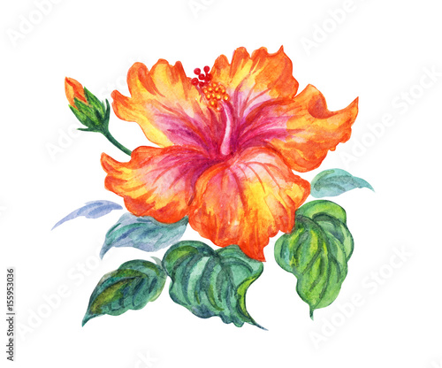 Yellow Hibiscus Watercolor Illustration On White Background Buy