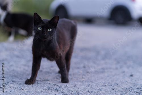Valokuvatapetti 好奇心の眼差しを向けてくる黒猫