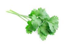 Fresh Green Cilantro Isolated On White Background