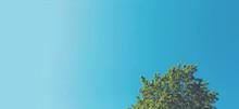Minimalist Tree Top With Sky Background