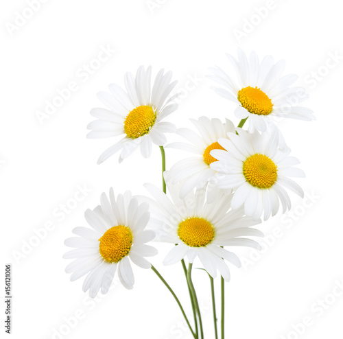 Foto op Canvas Madeliefjes Bouquet of Chamomiles ( Ox-Eye Daisy ) isolated on a white background.