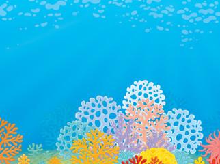Fototapeta na wymiar corals