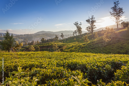 Foto op Canvas Herfst Sri Lanka tea plantation