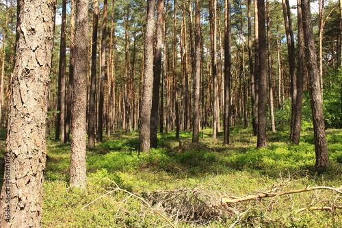 Wald im Schatten © marnag