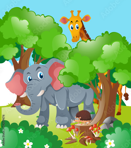 Giraffe and elephant in the forest