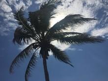 Palm Tree At Tulum