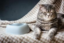 Cat And Empty Pet Food Bowl.