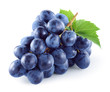 canvas print picture - Dark blue grape with leaves isolated on white background. With clipping path. Full depth of field.