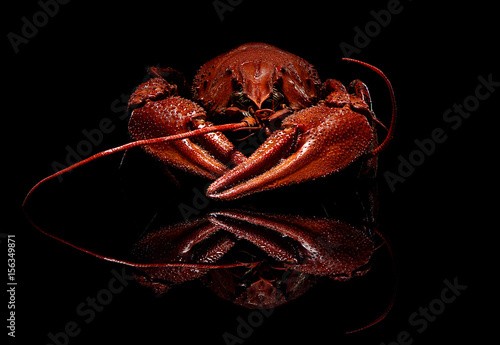 Foto auf Leinwand Schalentier Boiled crayfish isolated on black with reflection