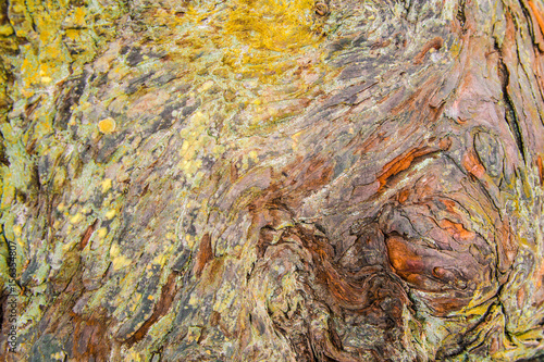 Foto Colorful natural wood grain texture from tree