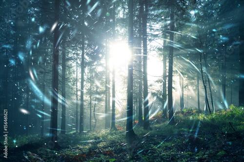 Zdjęcie XXL Fantazi błękitnej zieleni mgłowa lasowa bajka z okręgu świetlików bokeh tłem. Zastosowano efekt filtra koloru.